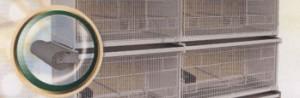 Carta Bulinata in bobina
